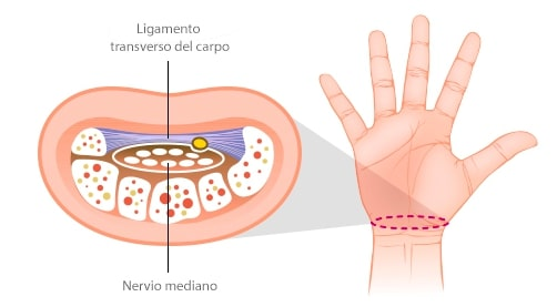tunel del carpo anatomia